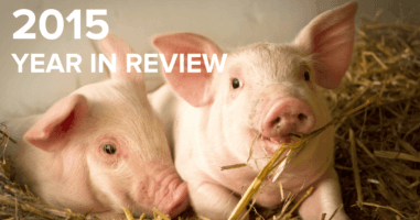ACE 2015 Year in Review