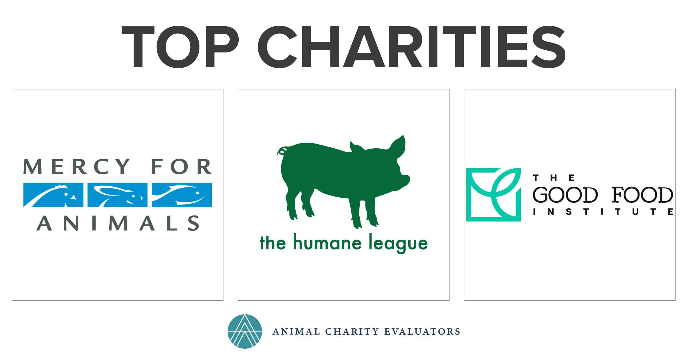 top charities animal charity evaluators