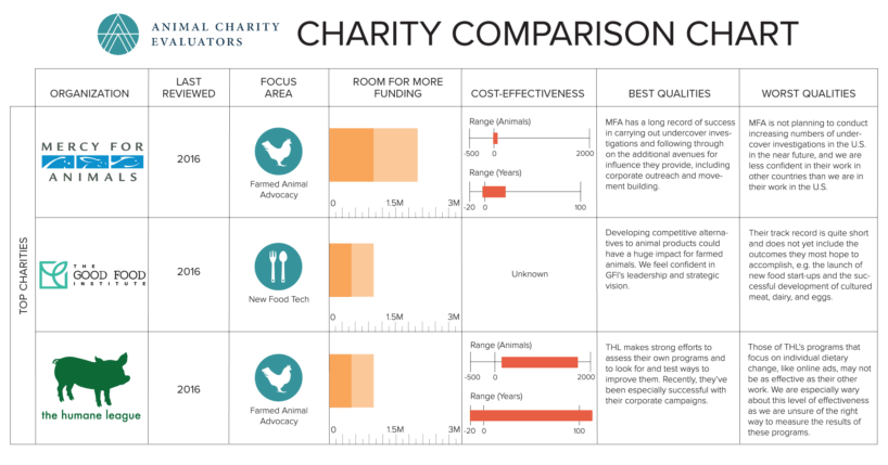 Comparing Top And Standout Charities  Animal Charity. Travel Insurance For A Year Plan B 72 Hours. How To Finance A Business Wythe Hotel Rooftop. Superior Lending Mortgage My Checking Account. Fast Growing Skin Cancer Canadian Bank In Us. No Insurance Emergency Room Cute Date Ideas. Catalog Printing Miami Dentist Kansas City Ks. How To Make A Website In Html. Roll Up Residential Garage Doors